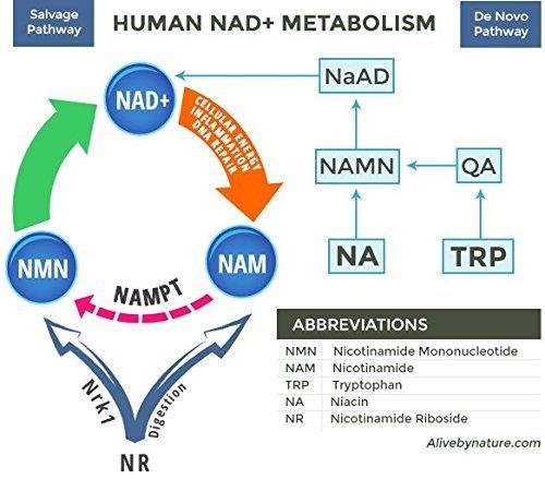 Alivebynature Sublingual NMN 125mg x 240 Tablets Nicotinamide Mononucleotide by alivebynature (Image #7)