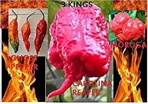 Carolina Reaper Ghost Pepper Moruga Scorpion 30