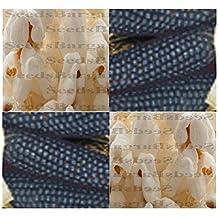 "(10) MINI BLUE POPCORN Corn seeds - DECORATIVE & RARE - 2-4"" long tiny ears"