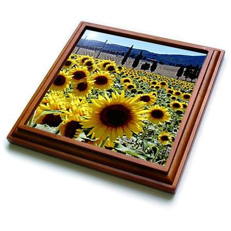 (3dRose trv_764_1 Sunflowers Trivet with Ceramic Tile, 8 by 8