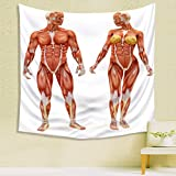 Tapestry wall hangingMaleand Female muscular skeletal system isolated on a white background .Part of a muscle medical series. Mandala Wall Tapestries
