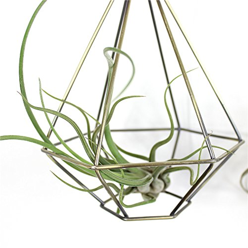 NCYP Rustic Hanging Diamond Tear Drop Shape Drop Rustic Style Freestanding Hanging Metal Tillandsia Air Plant Rack Holder Bronze 6.3inches width x 6.3inches width x 7.87inches height No Plants