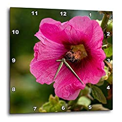 3dRose Alexis Photography - Flowers Malva Mallow - Closeup View of a deep Pink Malva, Mallow, malvaceae Flower - 15x15 Wall Clock (DPP_319940_3)