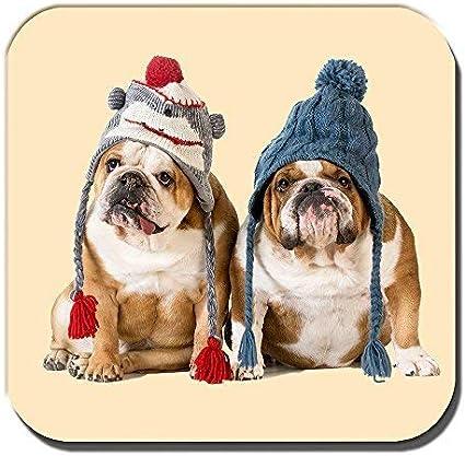 Cushions Corner Inglés Bulldogs Montaña Rusa Young Perros Marrón Blanco Invierno de Punto Hats