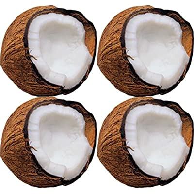 Monkey Mischief Coconuts Classic Accents: Office Products