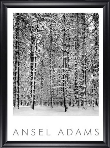 Pine Forest in the Snow Ansel Adams 28x40 Gallery Quality Framed Art Print Landscape B&W Photography (Ansel Adams Gallery Yosemite National Park)