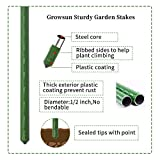 Growsun 5 Ft 5-Pack Tomato Cage Plant Support