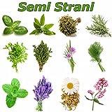Plantes aromatiques comment les cultivez les r colter les conserver - Comment conserver du basilic ...