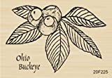 Buckeye Outdoors Ohio Buckeye Rubber Stamp By DRS Designs