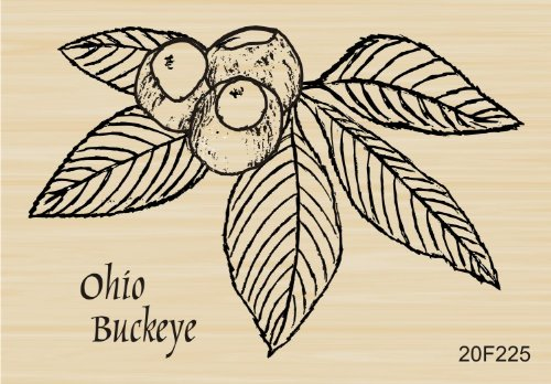 (Ohio Buckeye Rubber Stamp By DRS Designs)