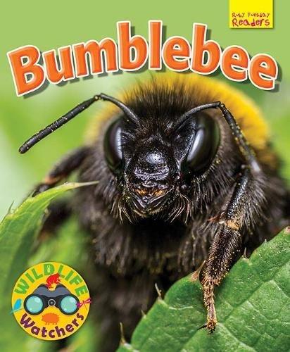 Read Online Wildlife Watchers: Bumblebee 2017 (Ruby Tuesday Readers) pdf