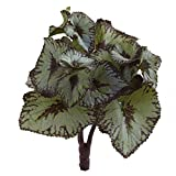 Nearly Natural Rex Begonia Artificial Bush
