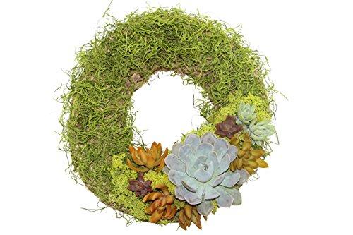 Shop Succulents Green Living Wreath