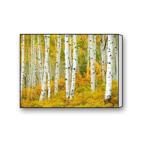"Aspen American Aspens Populus Tremuloide Shumen Tree Leaves With Golden Yellow Splendid Colorado Decorative Painting Modern Wall Art Home Decor Canvas Print 16""x12"""