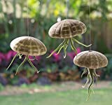 Urchin Air Plant Trio | 3 Alfonso Sea Urchins and Medusa Tillandsia Gift Set | Jellyfish Trio | Nautical Crush Trading