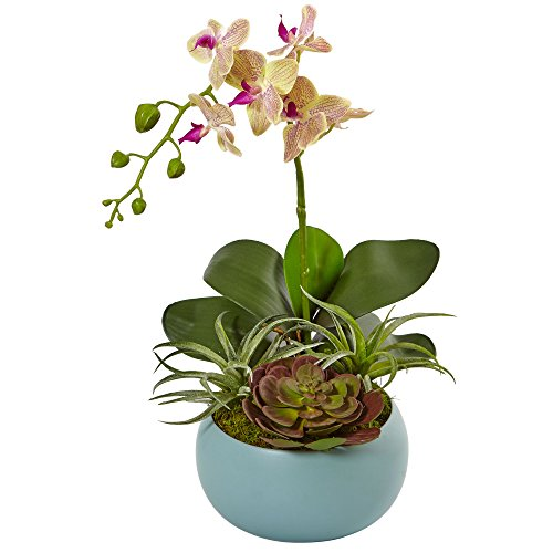 (Nearly Natural Phalaenopsis Orchid Arrangement, Cream)