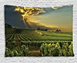 Winery Kitchen Decor Winery Decor Tapestry by Ambesonne, Sunset over the Vineyards of the South of France Sunbeams Cloudscape Picture Print, Wall Hanging for Bedroom Living Room Dorm, 80 W X 60 L Inches, Green Yellow Gray