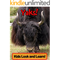Yaks! Learn About Yaks and Enjoy Colorful Pictures - Look and Learn! (50+ Photos of Yaks)