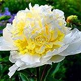 New 2018!10cs Mains' Tree Peony Bonsai Rare Beautiful Garden Flower Plant Mix Color Paeonia Suffruticosa-Land