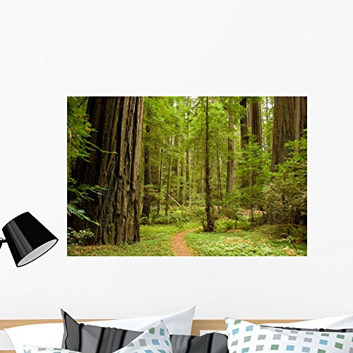 Wallmonkeys Path through Redwood Forest Wall Mural Peel and Stick Graphic (36 in W x 24 in H) WM223909