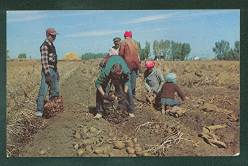 Harvesting World Famous Idaho RUSSETT POTATO Farming Postcard
