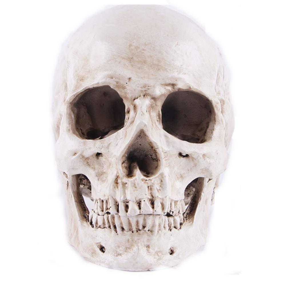 Yundxi Human Decor Realistic Skull Head Skeleton Head Statue for Home Halloween Decoration by Yundxi