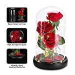 Beauty-and-The-Beast-Rose-Enchanted-Red-Silk-Rose-Forever-Flower-with-Fallen-Petals-in-A-Glass-Dome-Home-Office-or-Home-Decorations-Anniversary-Valentines-Day