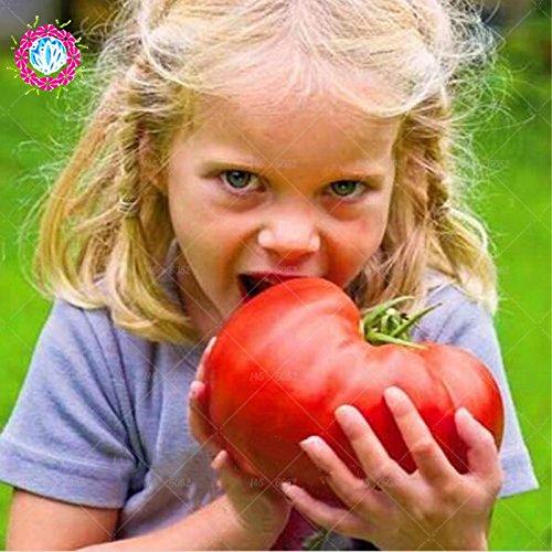 11, 11 Nouveaux graines de tomates rares + HEIRLOOM Semences Potagères - « géant Beefmaster hybride tomate » non-OGM et DÉLICIEUX !! SVI