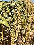 Nemeth Farms Worlds Freshest Non-GMO Pesticide Free