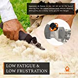 Pet & Livestock HQ | 380W Sheep Shears Electric