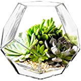 "CYS EXCEL 玻璃几何花瓶,棱镜花瓶,蜂巢花瓶 1 件 H-6"" Open 3"" GGV101/06-1P/MVG"