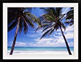 GreatBIGCanvas ''Looking Out To Sea Through Palm Trees From Kilifi'' by Ian Cumming Photographic Print with Black Frame, 36'' x 26''