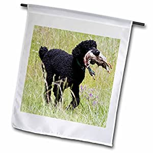 Florene Dog - Standard Poodle - 18 x 27 inch Garden Flag (fl_49369_2)