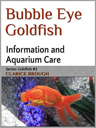 Bubble Eye Goldfish Care
