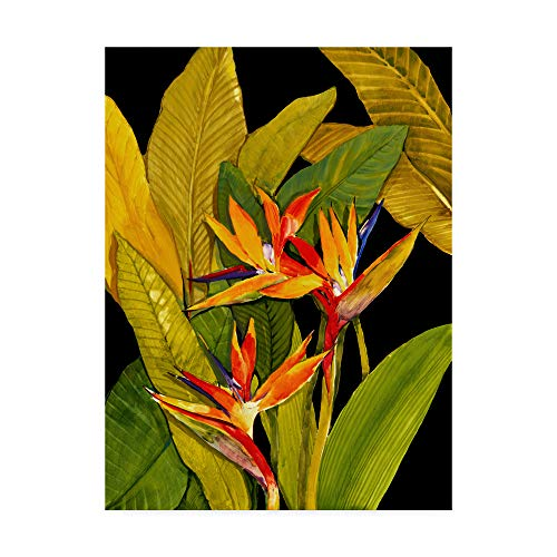 - Trademark Fine Art WAG00927-C2432GG Dramatic Bird of Paradise by Tim Otoole, 24x32-Inch, 24x32, Multicolor