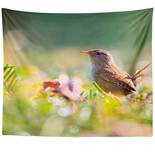 Hummingbird Blossom Hanging Feeder (Westlake Art - Wall Hanging Tapestry - Bird Fauna - Photography Home Decor Living Room - 51x60in)
