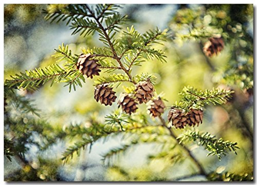 Green Nature Photography, Hemlock Picture, Evergreen Pinecones Wall Art.