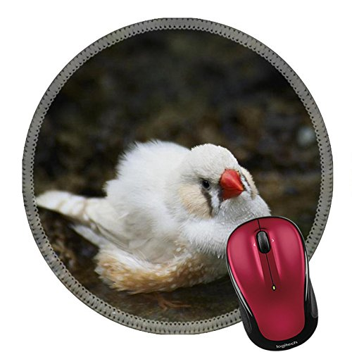 Price comparison product image Liili Mouse Pad Natural Rubber Round Mousepad Zebra Finch Taking A Bath Close Up Image ID 22562426