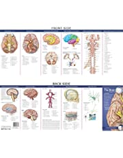 Anatomical Chart Company's Illustrated Pocket Anatomy: Anatomy of the Brain Study Guide (Study Guide)