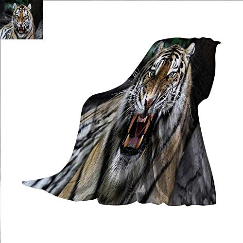 Wild Safari African Dog (African Digital Printing Blanket Tiger Face with Roaring Wildlife Safari Savannah Animal Nature Zoo Photo Print Summer Quilt Comforter 62 x 60 inch Multicolor)