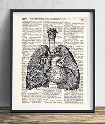 Heart and Lungs Anatomy Vintage Illustration Dictionary Art Print 8x10