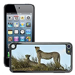 Super Stella Slim PC Hard Case Cover Skin Armor Shell Protection // M00149509 Cheetahs Watching Resting Wildlife // Apple ipod Touch 5 5G 5th