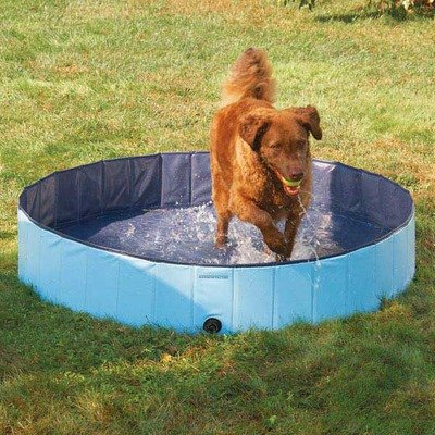 Splash About Dog Pools Size: Large, My Pet Supplies