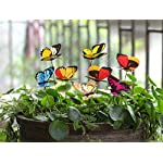 "Ginsco 25pcs Butterfly Stakes Outdoor Yard Planter Flower Pot Bed Garden Decor Butterflies Christmas Tree Decorations 4 Ships from US. 25pcs, Color sent in Random,some may be the same. Each approx. 10-1/4"" x 2-3/4"" x 2-1/4"" The wings can be pushed open or shut for varied display."