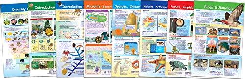 NewPath Learning 94 7004 Diversity Bulletin