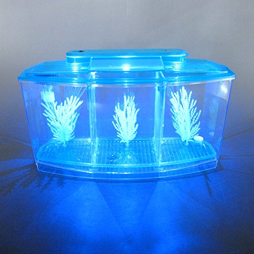 Alfie Pet by Petoga Couture - Baird Betta Aquarium Kit with 2 Dividers by Alfie