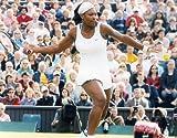 SERENA WILLIAMS USA TENNIS 8X10 HIGH GLOSSY SPORTS ACTION PHOTO (N)