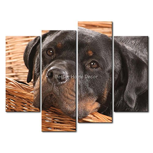 rottweiler pictures - 8