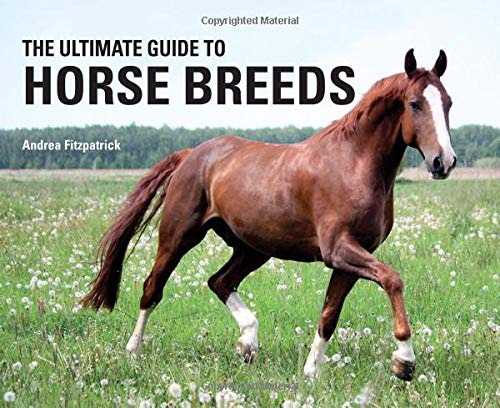 The Ultimate Guide to Horse Breeds ()