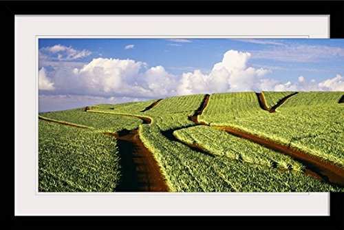 GreatBIGCanvas ''Hawaii, Maui, Pukalani, Pineapple Fields Stretch Out To The Horizon'' by Dana Edmunds Photographic Print with Black Frame, 36'' x 24'' by greatBIGcanvas